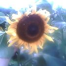 a watching sunflower/cyclopse by nutchip