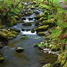 Dolgoch falls stream by Andy Cork