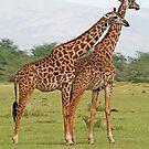 Friends, Lake Manyara National Park ,Tanzania, Africa by Adrian Paul