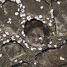 Sakura tears by Jenny Hall