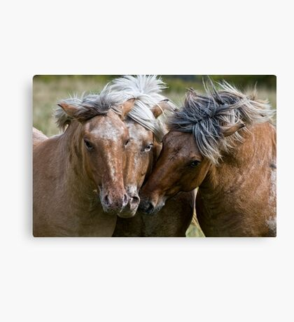 Horse Lords Canvas Print
