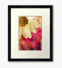 Daisy - Golden on Pink Framed Print