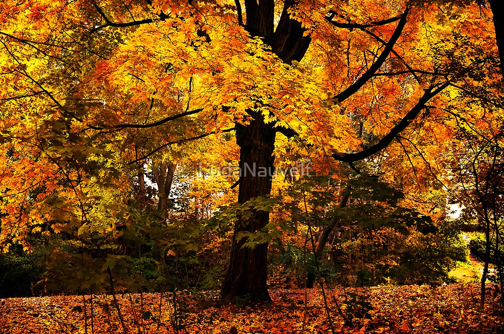 New England Maple by LudaNayvelt