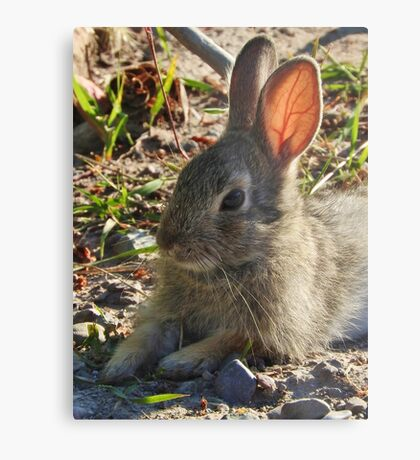 Summer Bunny Metal Print