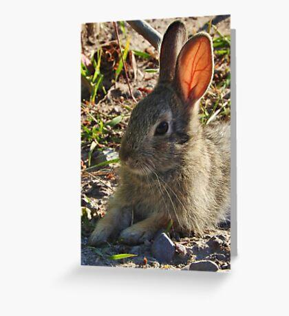 Summer Bunny Greeting Card