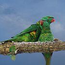 Parrot Love by byronbackyard