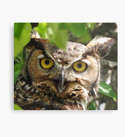 Great-horned Owl Closeup Metal Print