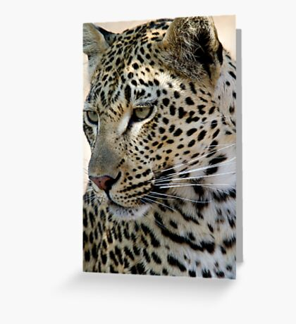 Maxabene 3:3 Young Male Leopard Greeting Card
