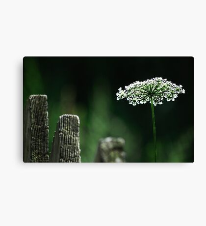 Beyond the fence Canvas Print