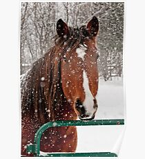 Horse In Snow Storm Poster