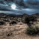 Joshua Tree National Park Sunset by toby snelgrove  IPA