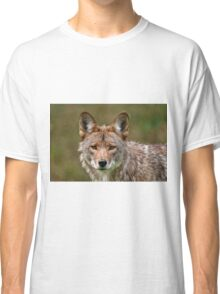 Coyote Portrait  Classic T-Shirt