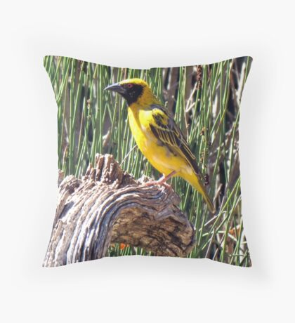 Village Weaver / Bontrugwewer Throw Pillow