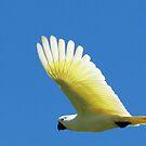 White Cockatoo by AUSSKY