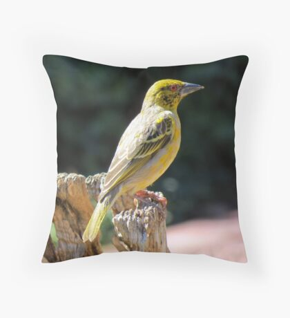 Spottedbacked Weaver Throw Pillow