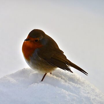 Robin in the Snow by tartanphoenix