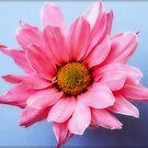 Untitled cute pink flower by George Kypreos