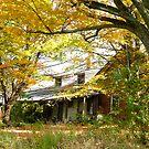 Old Farm House Behind Color by Deborah  Benoit