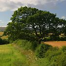 Ash tree in the English countryside by christopher363