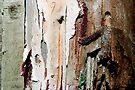 peeling paint photographer by richman