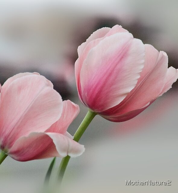 Twin Pinks by MotherNature2