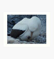 Baby Bird - Galapagos Art Print