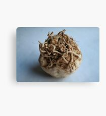 Root Vegetable Canvas Print