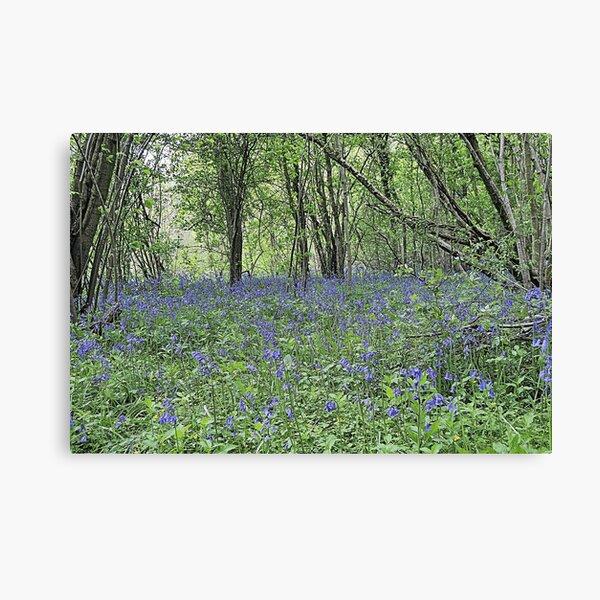 Stalbridge Blue Bell Wood Canvas Print