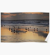 Seaside gulls at dusk Poster