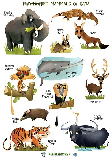 Quot Endangered Mammals Of India Quot Poster By Rohanchak Redbubble
