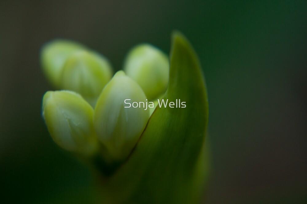 Lemon Drops by Sonja Wells