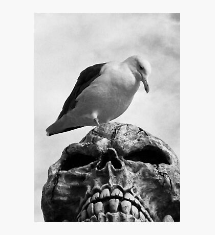 Once Upon a Pirate Skull Photographic Print