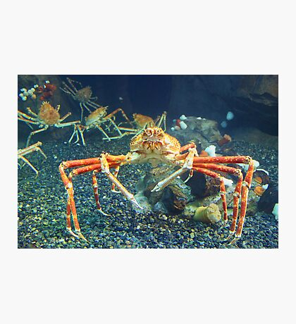 Crab World Photographic Print