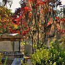Savannah Cemetery by socalgirl