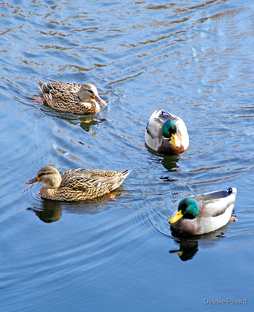 Four Ducks - Rideau River, Manotick by Debbie Pinard