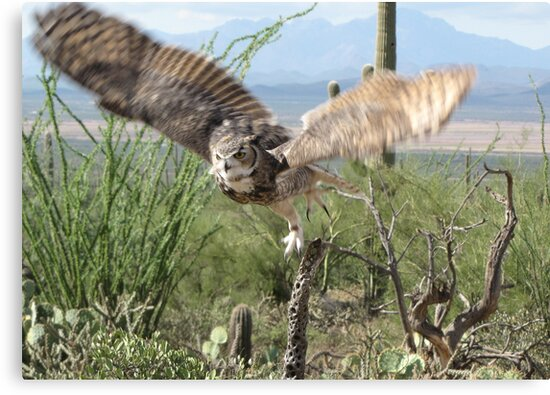 Great Horned Owl ~ Captive by Kimberly Chadwick