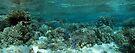 Wonderland II by Reef Ecoimages