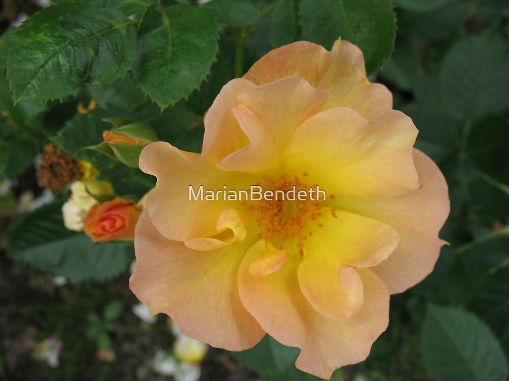 Honeysuckle Rose by MarianBendeth
