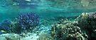 Wonderland III by Reef Ecoimages