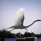 louisiana egret in flight by leapdaybride