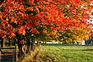 Bursts of Fall Color by John Carpenter