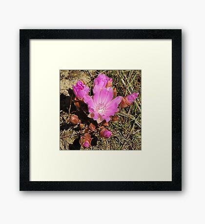 Montana State Flower Framed Print