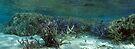 Wonderland IV by Reef Ecoimages