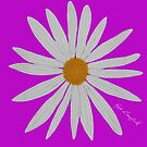 WHITE DAISY PINK by RoseLangford