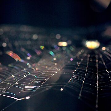 Iridescent Web by BecsPerspective