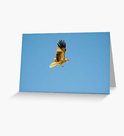 Kite - Adelaide river Greeting Card