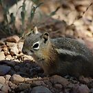 Chipmunk by Vicki Pelham