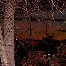naked tree at night by deegarra