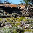 Landscaped by Nature!! ,Kalgoorlie. West Australia by robynart