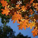 Autumn Light by Alison Malcolm Flower